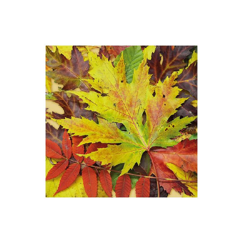 Papírové ubrousky podzimní barevné listí balení 20ks